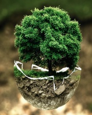 Earth Tree