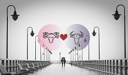 Aries And Taurus Compatibility In Love, Relationship And Sex